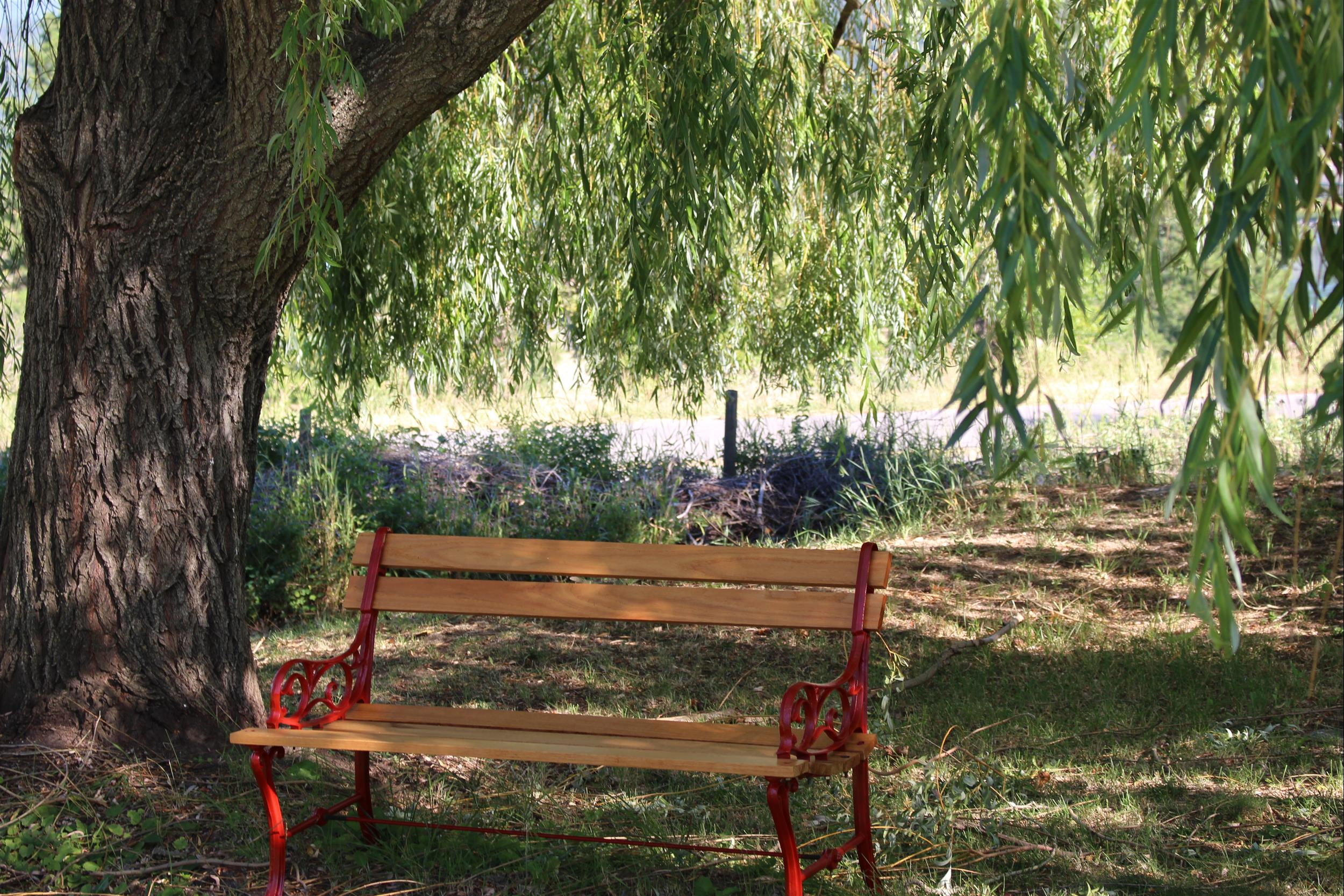 bench under willow tree